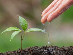 close-up-picture-hand-watering-sapling-plant